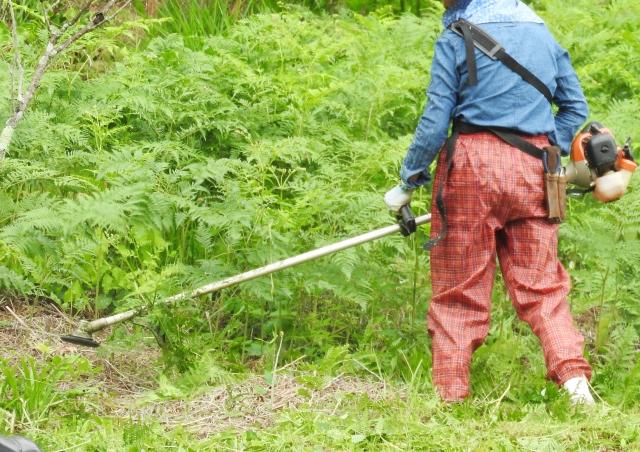 函館市で草刈りにかかる料金相場は?追加料金や業者選びのコツまで解説